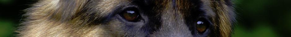 Bild Hundesport 1